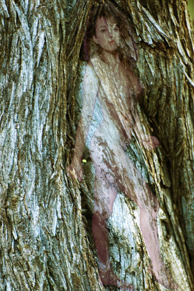 Photograph - Tree Nymph In Vancouver by Richard Henne