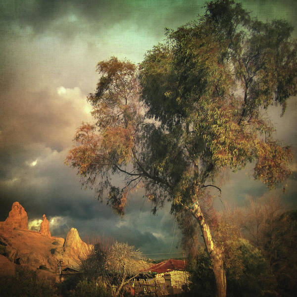 Photograph - Tree Of Confusion by Zapista Zapista