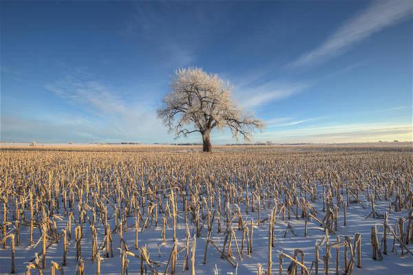 Cornfield Photograph - Tree Of Frost  by Aaron J Groen