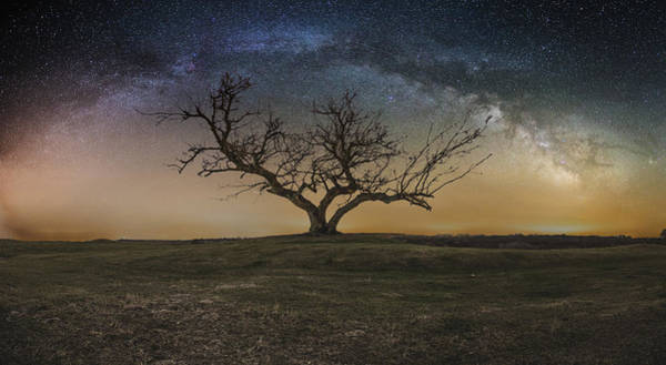 Photograph - Tree Of Happiness  by Aaron J Groen
