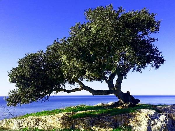 Photograph - Tree Of Life - 3 by Tap On Photo