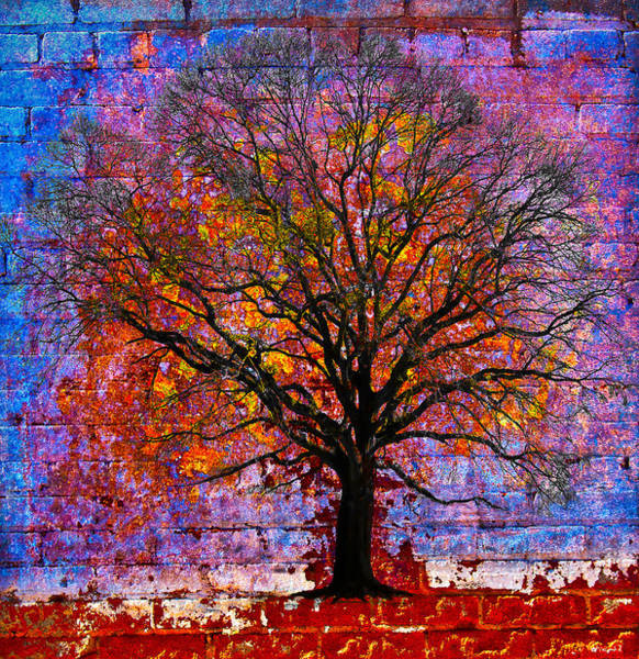 Photograph - Tree Of Life by David Clanton