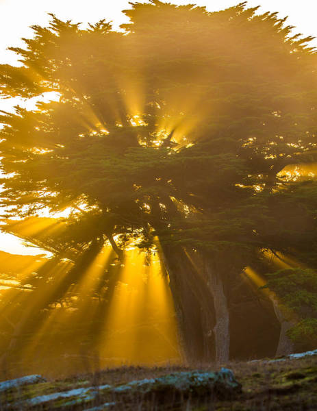 Photograph - Tree Of Life  by Kevin Dietrich