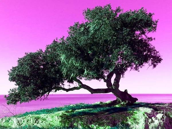 Photograph - Tree Of Life - 1 by Tap On Photo