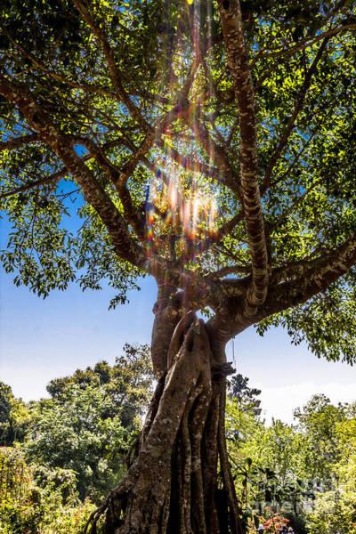 Chang Mai Wall Art - Photograph - Tree Of Life by Thomas Levine