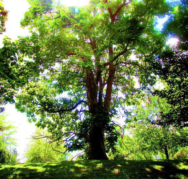 Shrub Mixed Media - Tree Of Light by Art By ONYX