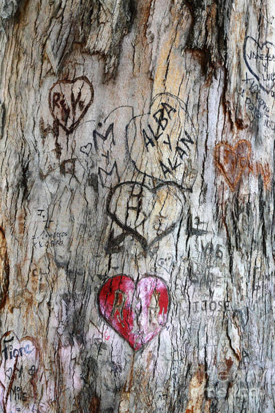 Photograph - Tree Of Love 4 by James Brunker