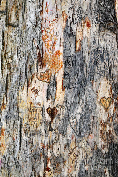 Photograph - Tree Of Love 2 by James Brunker