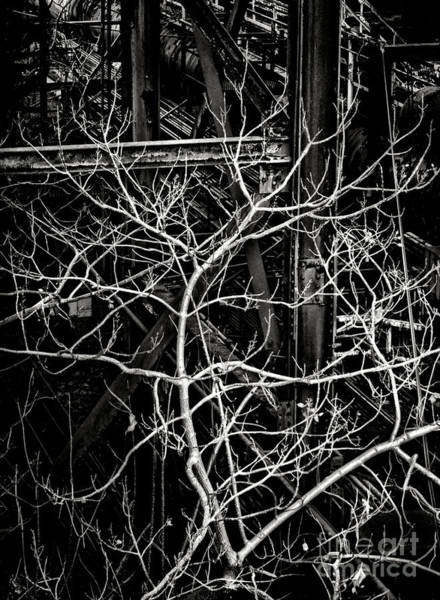 Wall Art - Photograph - Tree Of Non Life by Olivier Le Queinec