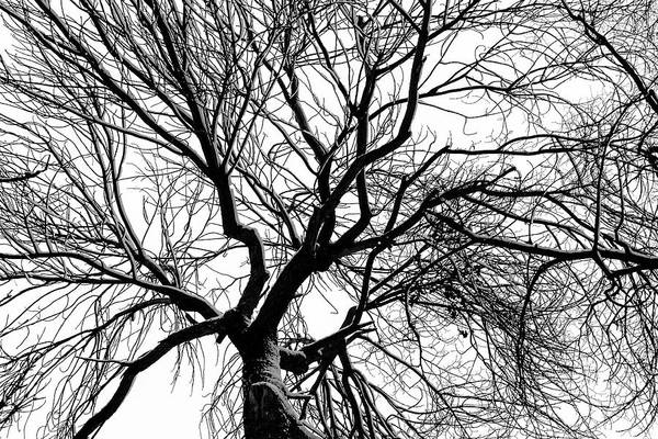 Photograph - Tree Of Shadow And The Vast White Sky by John Williams