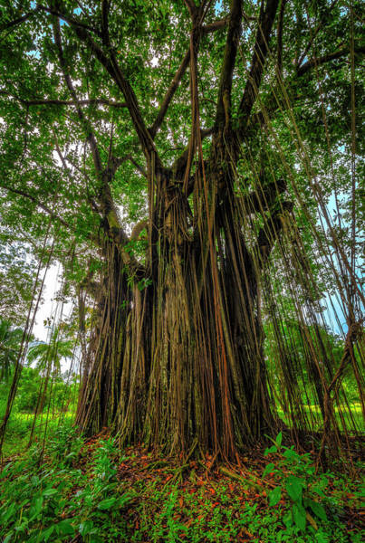 Photograph - Tree Of Souls by David Morefield