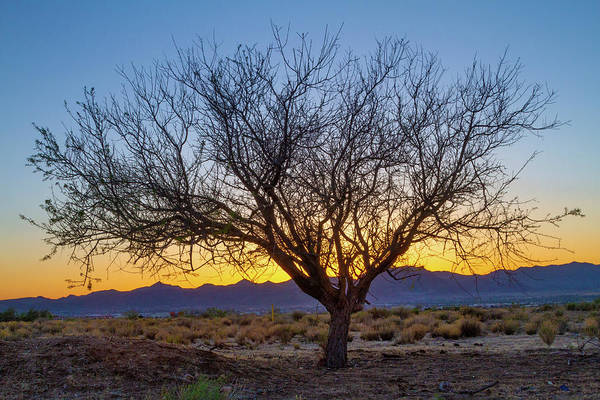 Photograph - Tree Of The Desert by Bonnie Follett
