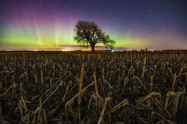 Photograph - Tree Of Wonder by Aaron J Groen