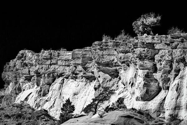 Photograph - Tree On A Cliff - New Mexico by Stuart Litoff