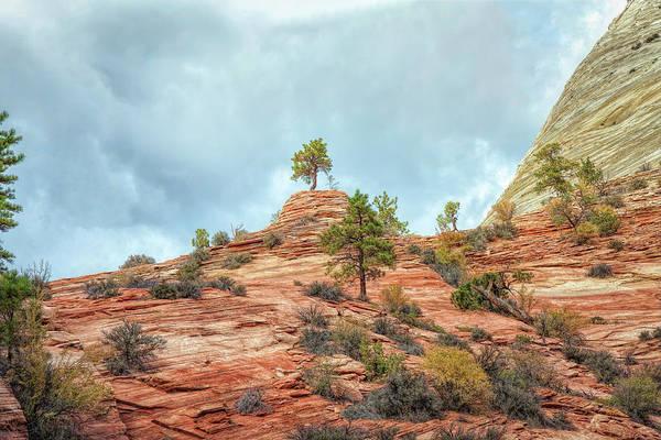 Photograph - Tree On A Pedestal by John M Bailey