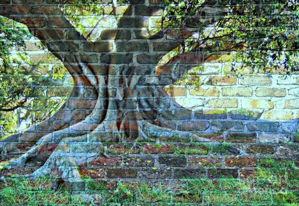 Wallpaper Mixed Media - Tree On A Wall by Leanne Seymour