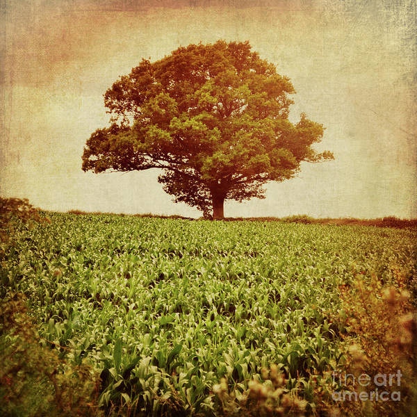Wall Art - Photograph - Tree On Edge Of Field by Lyn Randle