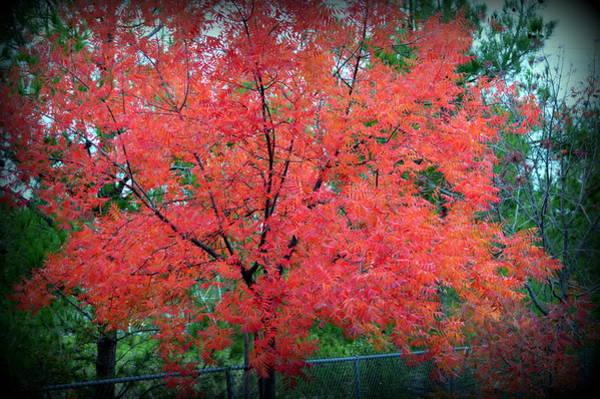 Photograph - Tree On Fire by AJ Schibig