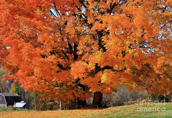 Photograph - Tree On Fire by Deborah Benoit