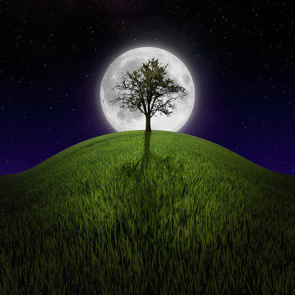 Wall Art - Photograph - Tree On Night Hill Lit By Moon by Miroslav Nemecek