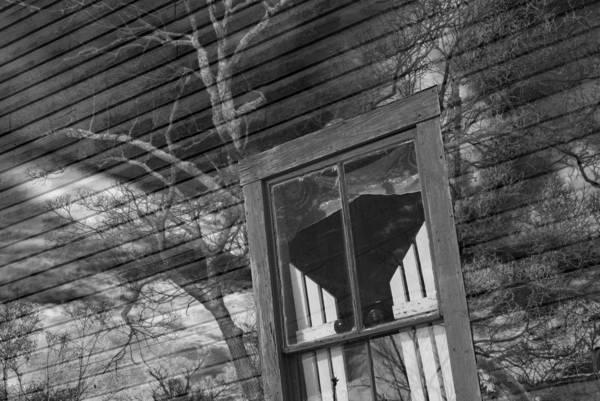 Tree On Window Art Print