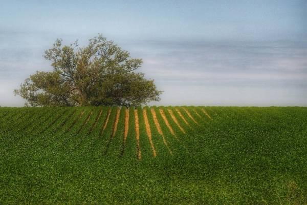 Photograph - 9010 - Tree Overlooking Farm Field by Sheryl Sutter