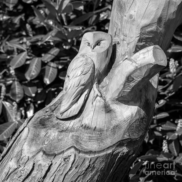 Church Stretton Photograph - Tree Owl  by Rob Hawkins