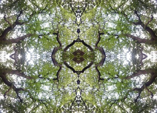 Tree Photo Fractal Art Print