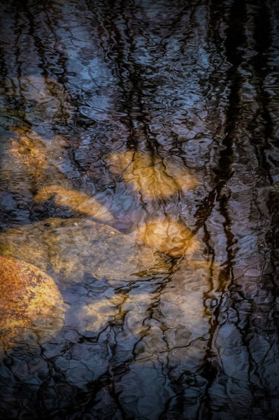 Photograph - Tree Pond Refections With Rocks by Randall Nyhof