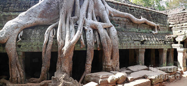 Photograph - Tree Roots Temple by Warren Photographic