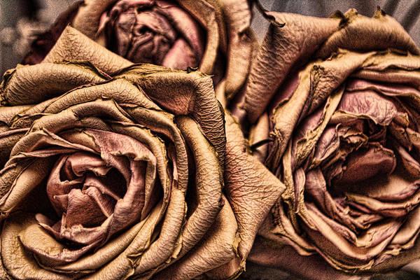 Wall Art - Pyrography - Three Roses by Leyla Munteanu