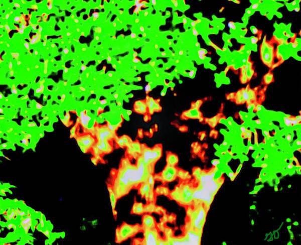 Photograph - Tree Shadows by Gina O'Brien