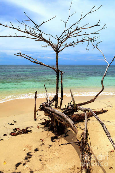 Photograph - Tree Shapes At Isla Zapatillas Panama by John Rizzuto