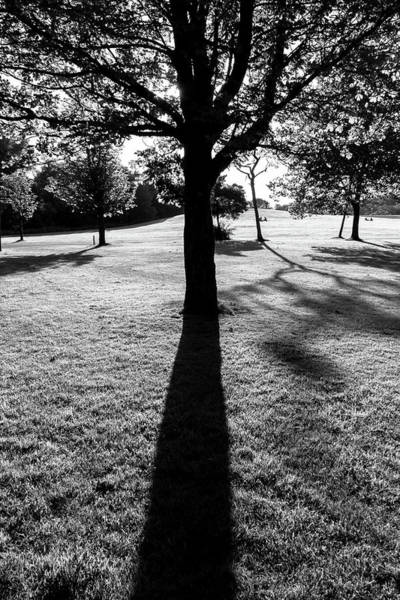 Wall Art - Photograph - Tree Silhouette And Shadow In Black And White by Iordanis Pallikaras