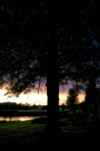 Wall Art - Photograph - Tree Silhouette At Sunset Vertical by Thomas Woolworth