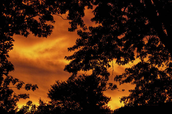 Wall Art - Photograph - Tree Silhouette During Orange Sunset by Thomas Woolworth