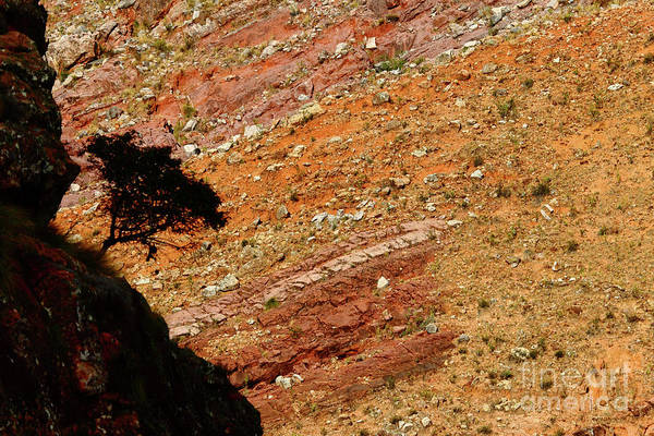 Photograph - Tree Silhouette In A Colourful Canyon by James Brunker