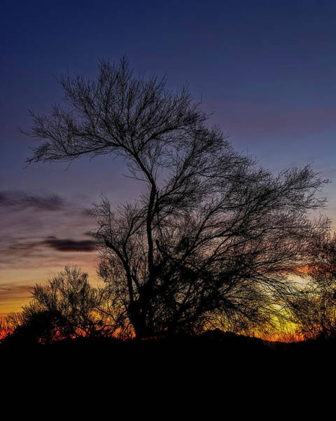 Photograph - Tree Silhouette Sunset V28 by Mark Myhaver