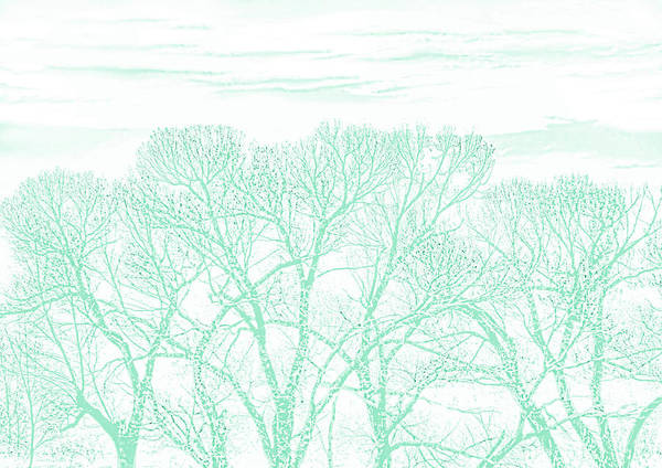 Wall Art - Photograph - Tree Silhouette Teal by Jennie Marie Schell