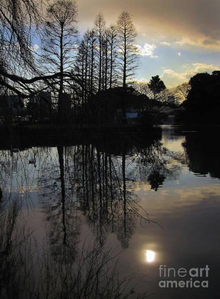 Photograph - Tree Silhouettes by Eena Bo