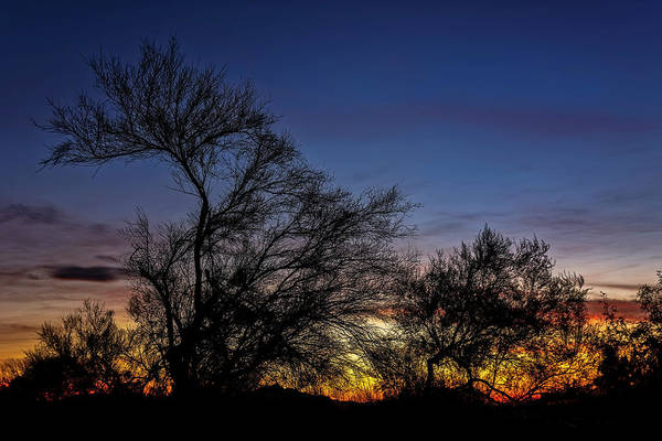 Photograph - Tree Silhouettes Sunset H15 by Mark Myhaver
