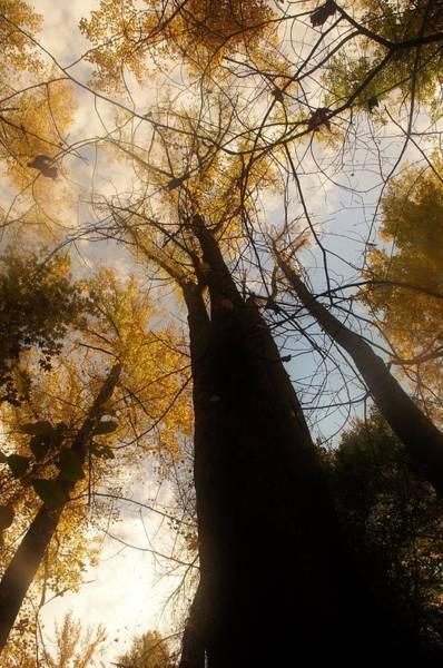 Photograph - Tree Sky by Buddy Scott
