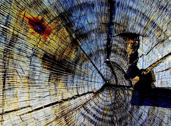 Photograph - Tree Slab - 5022 by Paul W Faust - Impressions of Light