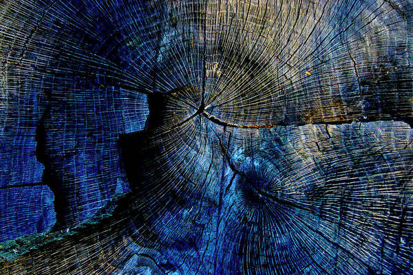 Photograph - Tree Slab - 5028 by Paul W Faust - Impressions of Light