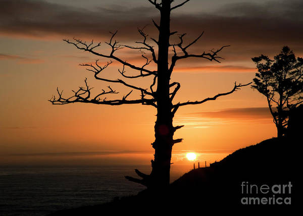 Photograph - Tree Snag And Sunset by Charmian Vistaunet