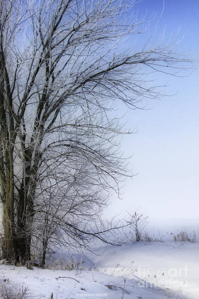 Photograph - Tree-snow-fog by Deborah Benoit