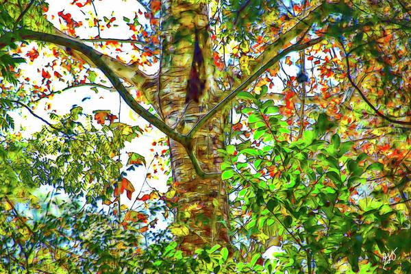 Photograph - Tree Spirit by Gina O'Brien