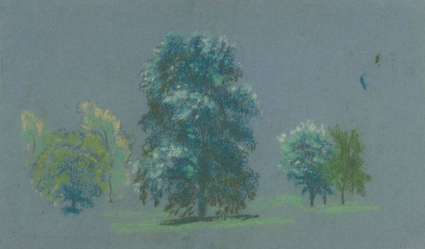 Drawing - Tree Study by Arthur Bowen Davies