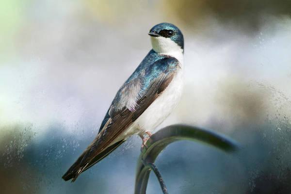 Bird Watcher Photograph - Tree Swallow by Cindi Ressler