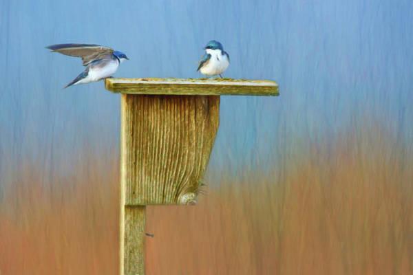 Wing Back Photograph - Tree Swallows - Nest Box by Nikolyn McDonald
